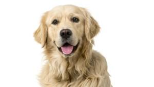 Wie kaufe ich mir einen Hund?