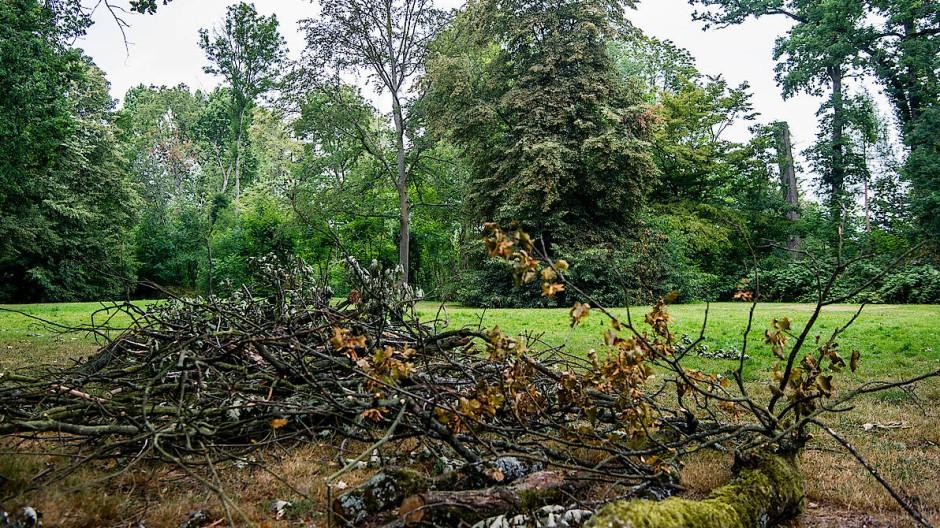 Der Trockenheit fielen im Rumpenheimer Schlosspark in Offenbach 450 Bäume zum Opfer.