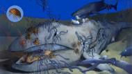 Aasfresser machen den Anfang: Schlafhaie (oben rechts), Grenadierfische (grau), Hunderte von Schleimaalen (blau), Königskrabben und Schwärme von Flohkrebsen können einen Walkadaver schon innerhalb von sechs Monaten skelettieren.