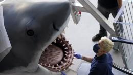 """""""Der weiße Hai""""  kommt ins Oscar-Museum"""