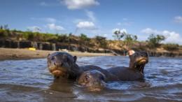 Die merkwürdigen Geschöpfe vom Rupununi River