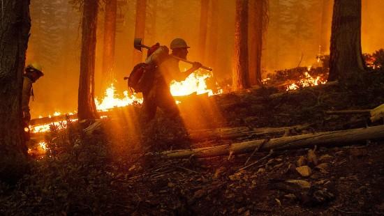 Waldbrände werden zum Wahlkampfthema