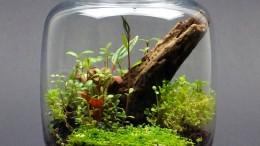 Eine eigene kleine Welt unter Glas