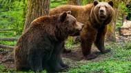 Das Ende der Bärenjagd