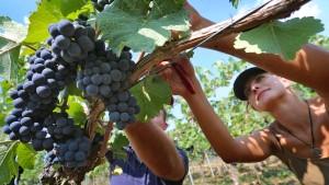 Wein in Deutschland ist teurer geworden