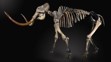 Jetzt gehört das Skelett einem Privatmann