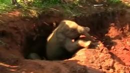 Elefantenkälber mit Bagger gerettet