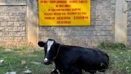 Bangalore: Die Stadt der Gärten versinkt im Müll