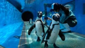 Auch Pinguine brechen Herzen