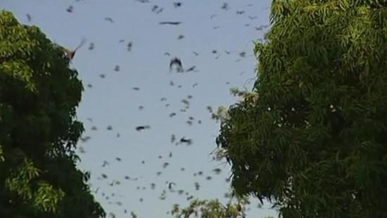 Fledermäuse haben Stadtpark besetzt