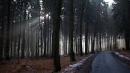 Wertbeständig: Bad Homburgs Stadtwald wirft regelmäßig Gewinn ab