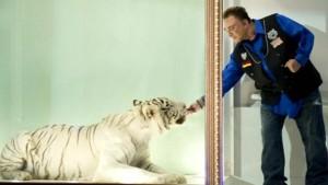 Roys Tiger ist tot