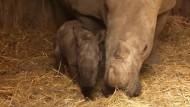 Ein Nashornbaby zum kuscheln zu süß