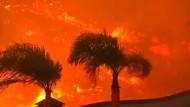 Unberechenbare Waldbrände halten Einsatzkräfte in Atem