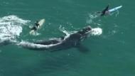 Wal kommt Surfern ungewöhnlich nahe