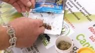 Gericht erlaubt im Einzelfall Cannabis-Anbau zu Therapiezwecken