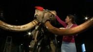 Biete Wollhaar-Mammut mit Stoßzähnen!