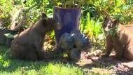 Pelzige Überraschung im Garten