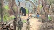 Aufräumarbeiten im Zoo