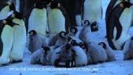 Pinguine vertrauen Roboter