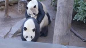 Privatsphäre für Pandas