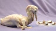 Seltene Pelikanküken im Zoo von San Diego