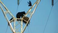 Bär erkundet Vogelnest in 30 Metern Höhe