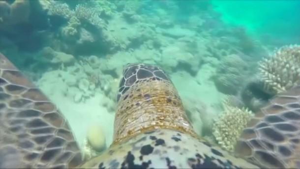 Unterwegs mit einer Meeresschildkröte im Great Barrier Reef