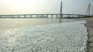 Tausende tote Fische in Tianjin