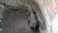 Elefanten-Baby aus Brunnen gerettet