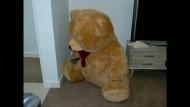 Mann versteckt Waffen in Teddybär