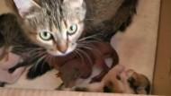 Katze zieht Eichhörnchenbabys auf