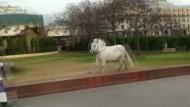 Pony bricht vor Bolschoi-Theater aus