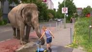 Großstadt-Elefant
