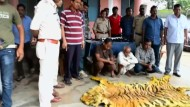 Polizei beschlagnahmt Tigerfell für 60.000 Dollar