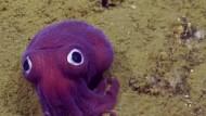 Ein Tintenfisch wie ein Spielzeug