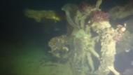 Schiffswrack aus dem 19. Jahrhundert entdeckt