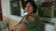 Zwergameisenbären werden zum Besuchermagnet