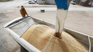 Amerikanische Sojabauern können sich freuen: China erhebt keine neuen Strafzölle auf Soja. Auch Schweinefleisch bleibt verschont.