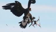 Adler als Drohnenjäger
