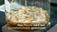 Bio-Plastik aus Garnelenschalen