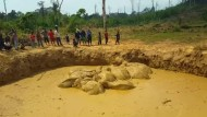 Elefanten retten sich gerade so aus Bombenkrater