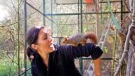Agil: Eichhörnchen Muddi krabbelt über den Arm seiner Ziehmutter Korinna Seybold-Hase.