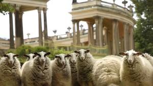 Die Schafe und das Schloss