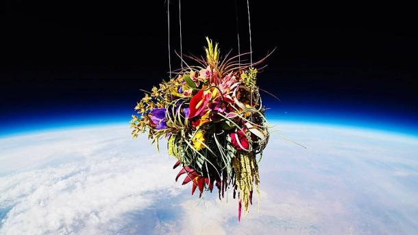 Bonsai ins All schießen, Blumen im Meer versenken
