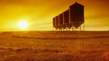 Die Getreidebauern fuhren 2014 eine gute Ernte ein - die Preise bleiben niedrig