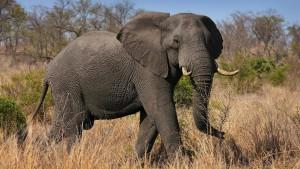 Mehr Schutz für Löwen, Elefanten und Graupapageien