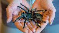 So kriegt man Angst vor Spinnen in den Griff