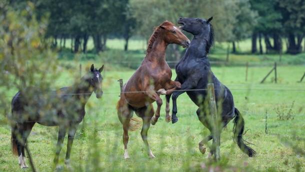 Drei Pferde nach Unfall auf A45 tot