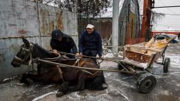 Sofia will Pferdewagen verbieten